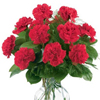 Order Red Carnations for a Victory Day and Mother's Day all over Russia and Ukraine